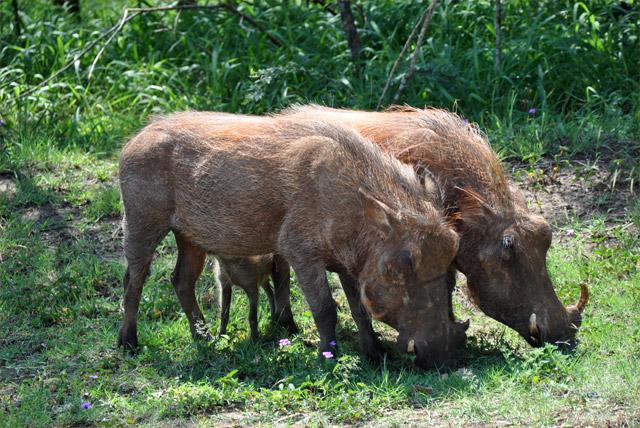 bushmeat-newsletter