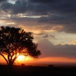 Kenya, 2009.©Center For International Forestry Research/Tim Cronin