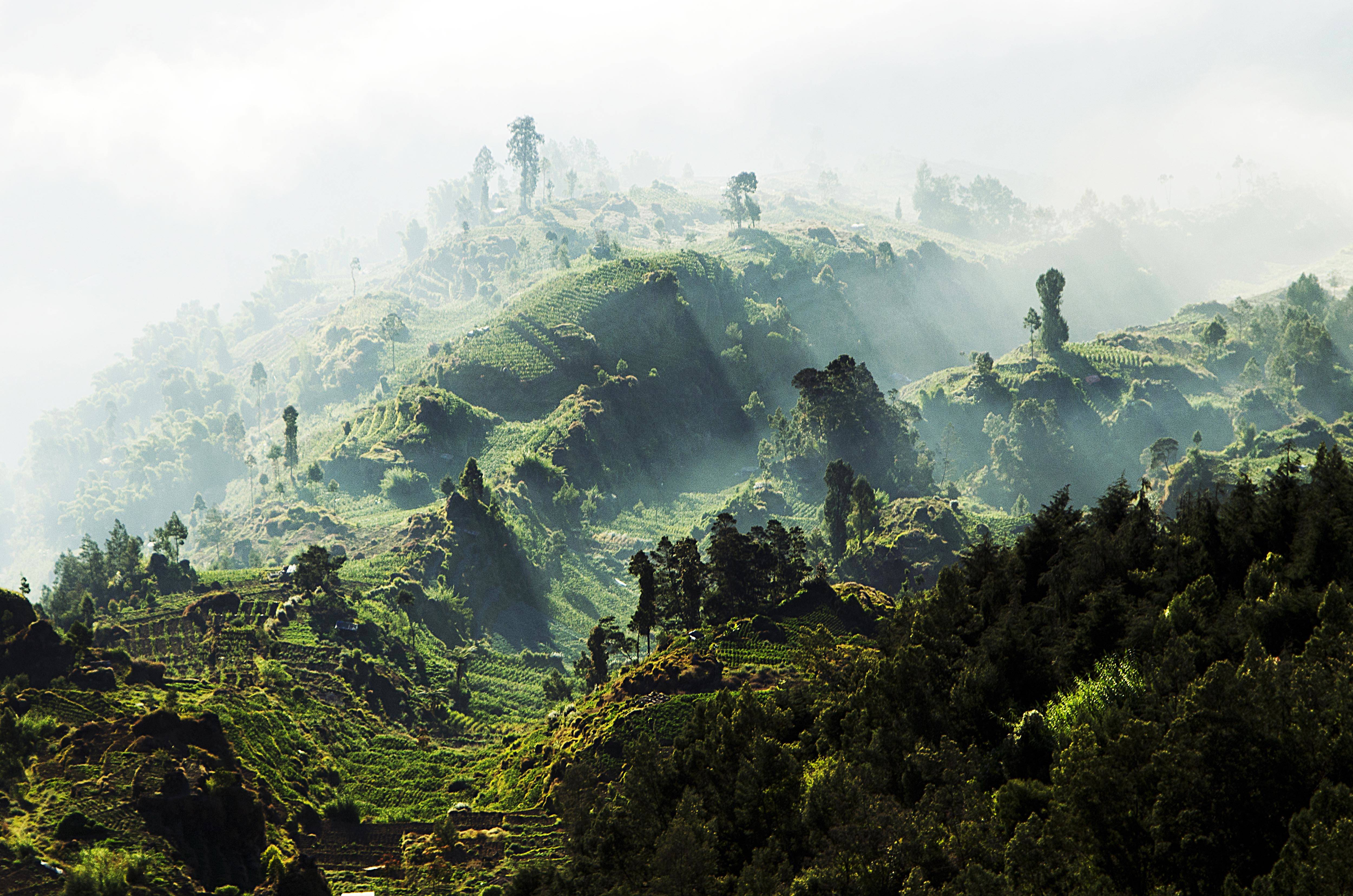 Forest At Dieng Plateau Forests Asia Tour Plateu