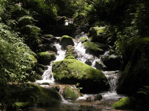 supreme value of forests in sustainable water supply