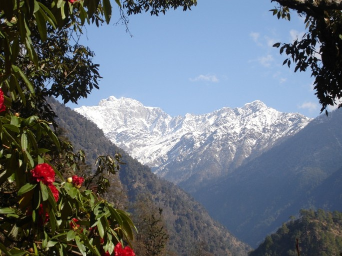 himalayan forests provide for hill people