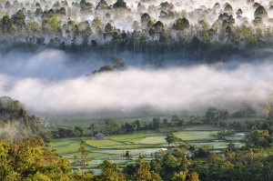 morning fogs at bukit barisan selatan national park