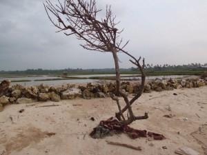 unprotected tree
