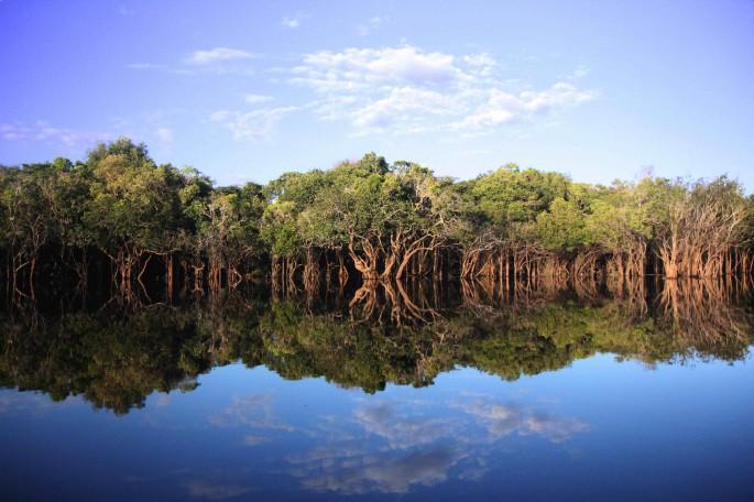 the freshwater swamp forests of lake sentarum