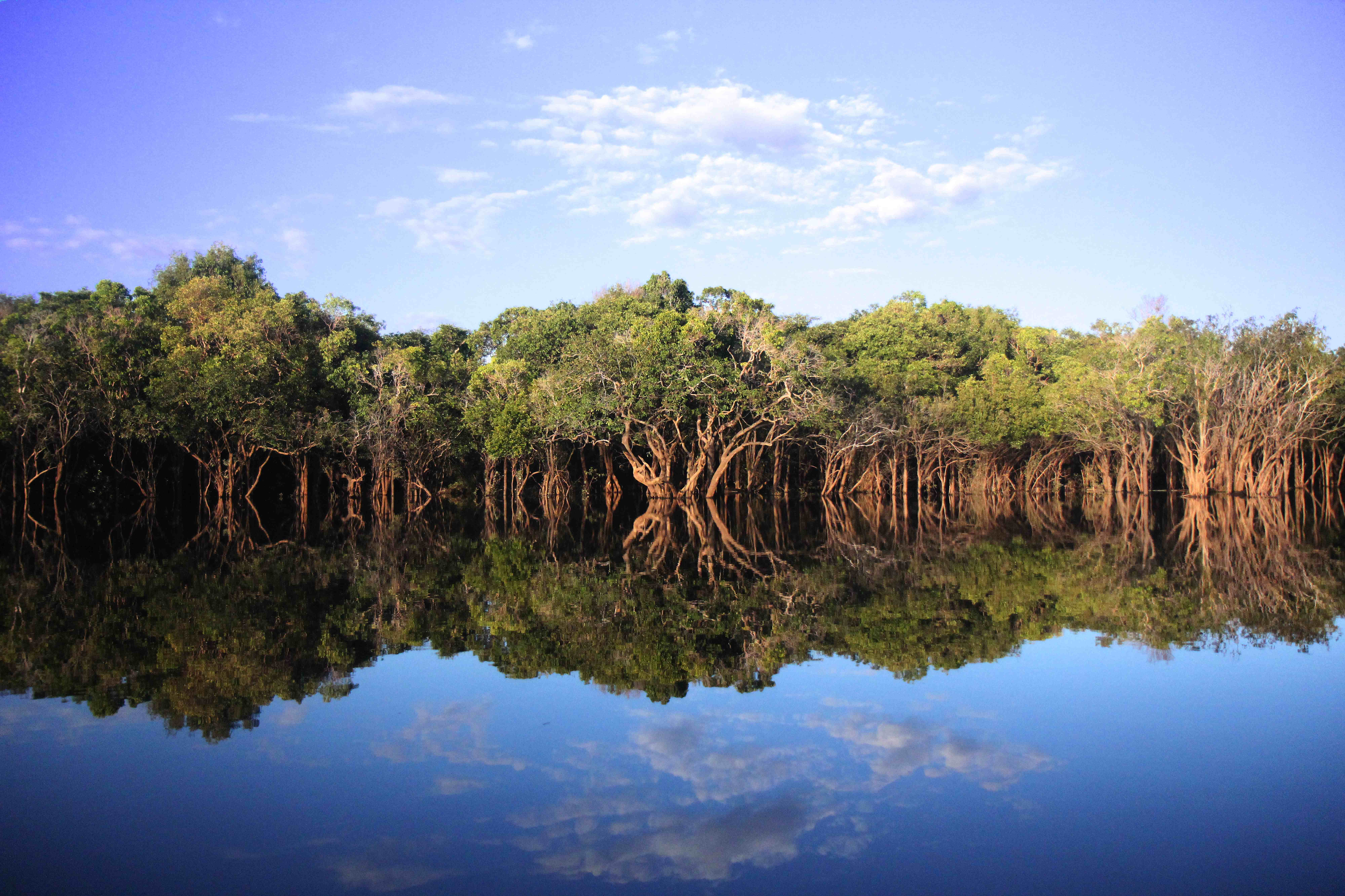 The Freshwater Swamp Forests of Lake Sentarum - Forests Asia