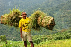 man with a basket of grass for fodder