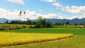 landscape in harmony