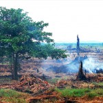 Peatland, Indonesia, 2007.