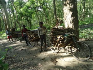 sustaining livelihoods through forest timber