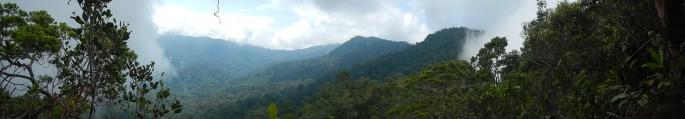 primary forest landscape from bukit baka