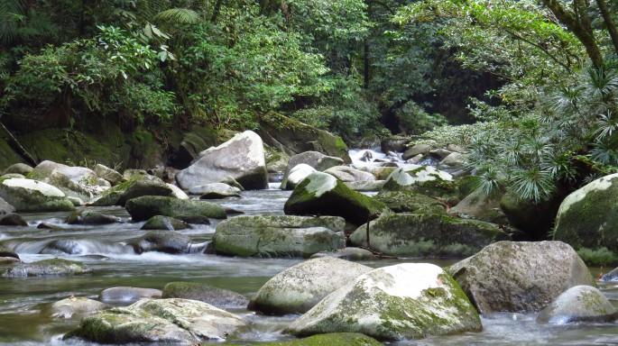upriver ella primary forest