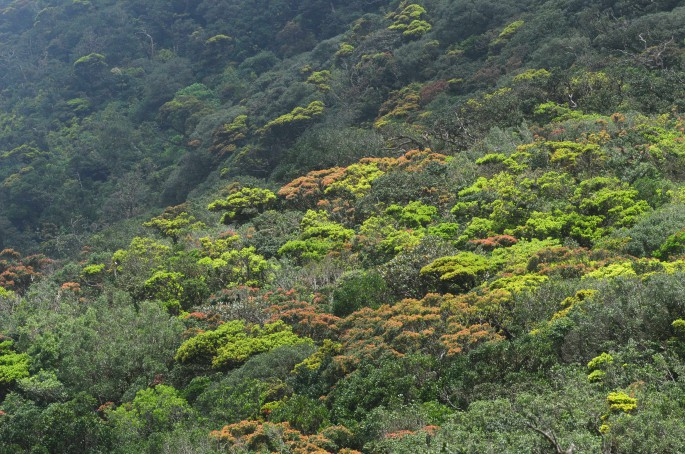 cloud forests knuckles mountain range