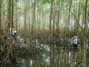 cambodian officers get wet and dirty in mangrove forest