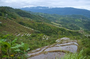 mountain rice paddies