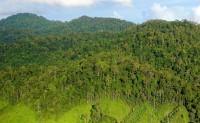 Forests_Lands