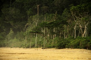 the last low tropical rain forest in java island