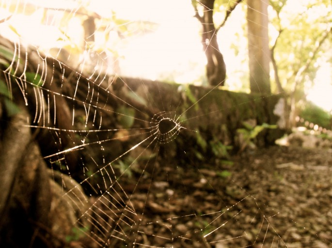 spider webs in sisophon