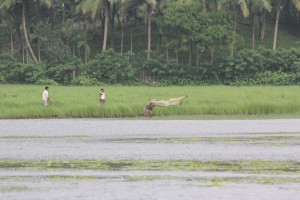 fishing at tsunami affected cultivated land at stewart gunj