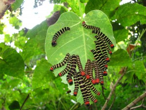 colorful caterpillars
