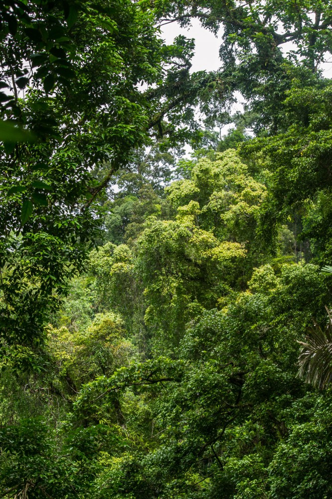 siberut tropical rain forest