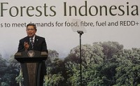 forests_indonesia_president_yudhoyono