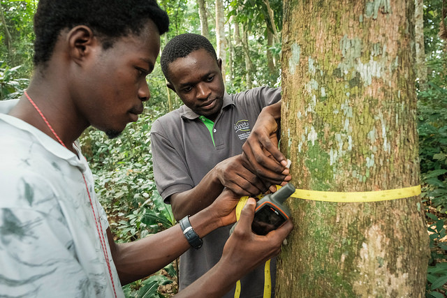 Unlocking the secrets of tropical trees