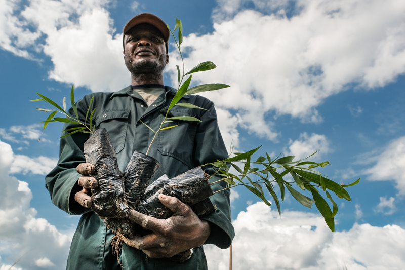 Energizing degraded land in the Congo Basin