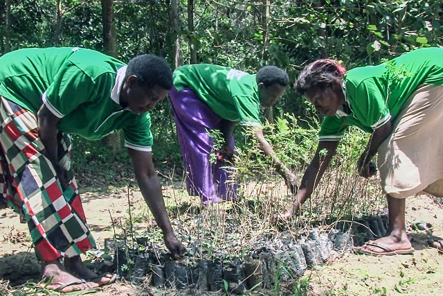 Include women in forest management: African policy makers urged