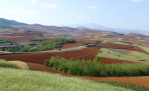 CIFOR to begin research on China's reforestation program – unprecedented in scale
