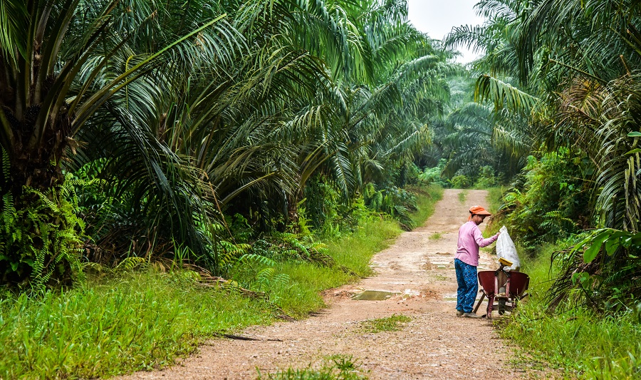 Oil palm research for sustainable development and better livelihoods